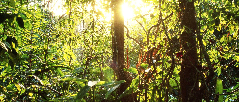 Leafy green jungle illuminated by sun's rays