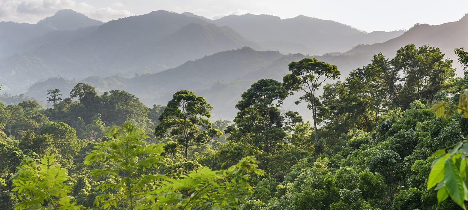honduras-esőerdő-tintasugaras-kellékek-újrahasznosítása